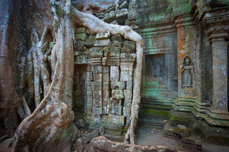 Templo de TA Prohm, Angkor, Camboya imagen de archivo