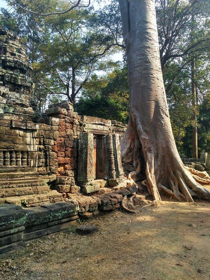 Templo de Ta Prohm de Angkor Wat em Camboja imagens de stock royalty free
