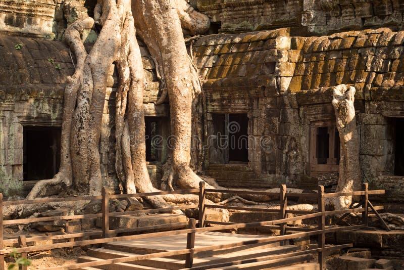 Templo de Ta Prohm coberto de vegetação com as árvores imagem de stock royalty free