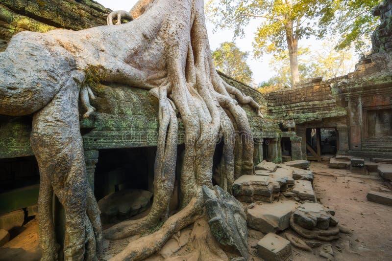 Templo de TA Prohm en Camboya fotos de archivo