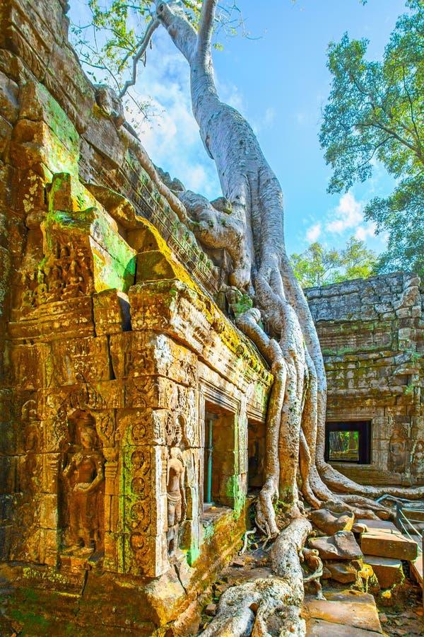 Templo de Ta Prohm no Angkor Wat imagem de stock