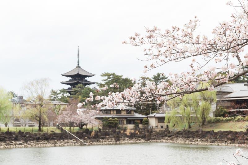 Templo del ji de Kofuku en Nara en primavera imágenes de archivo libres de regalías