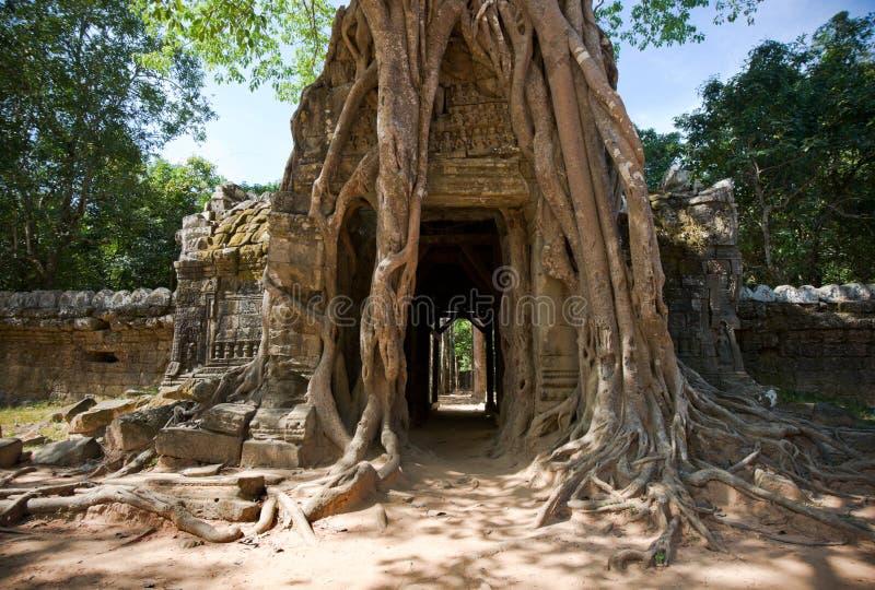 Templo del som de TA, Angkor, Camboya fotografía de archivo libre de regalías