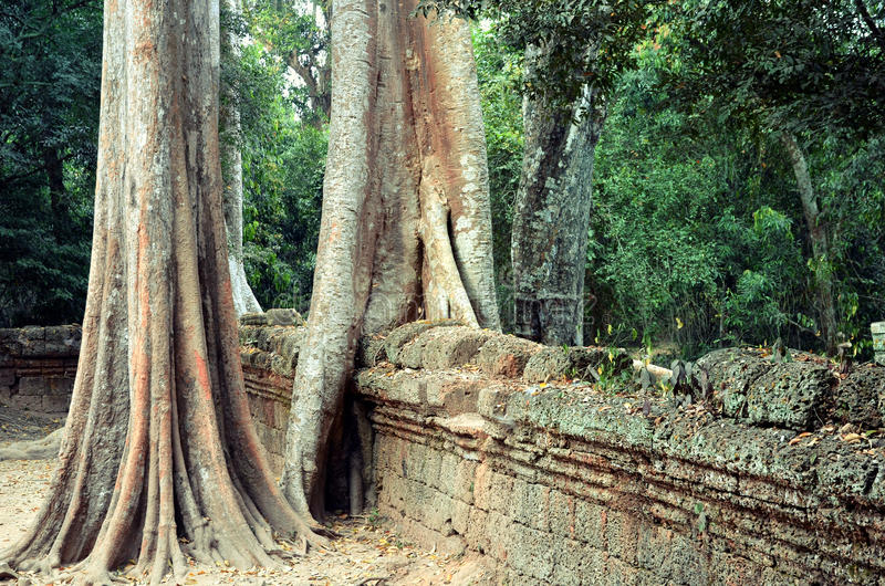 Templo do baile de finalistas de Ta em Angkor imagens de stock