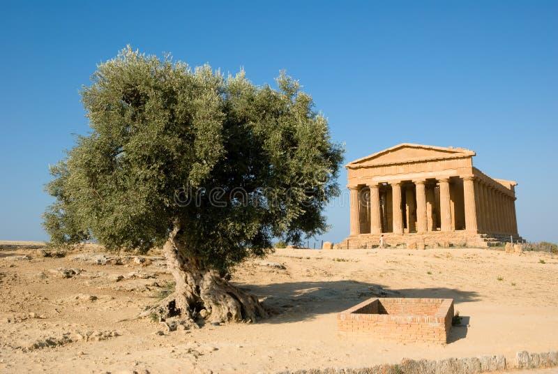 Templo Doric de Concordia com oliveira imagens de stock