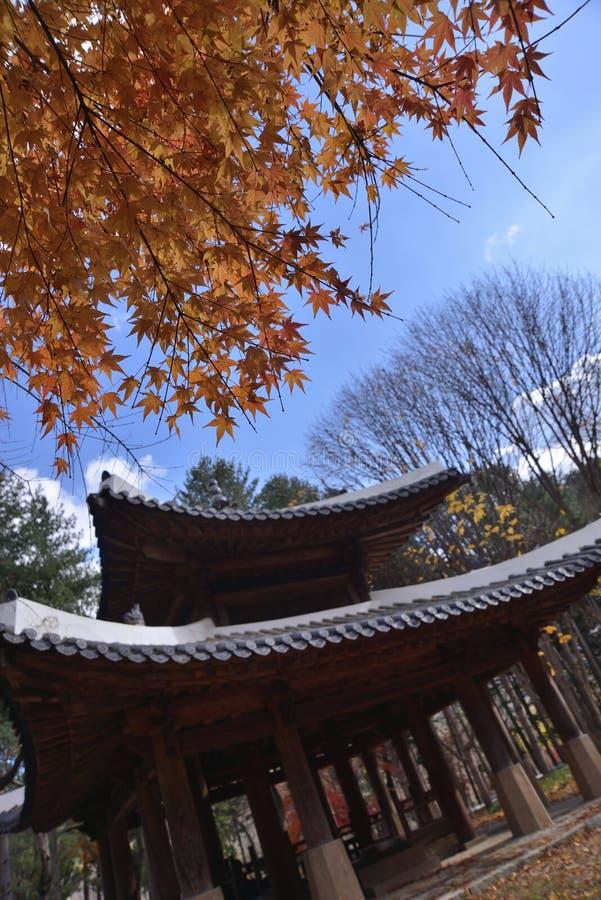 Templo lobed da folha de bordo sete imagem de stock royalty free