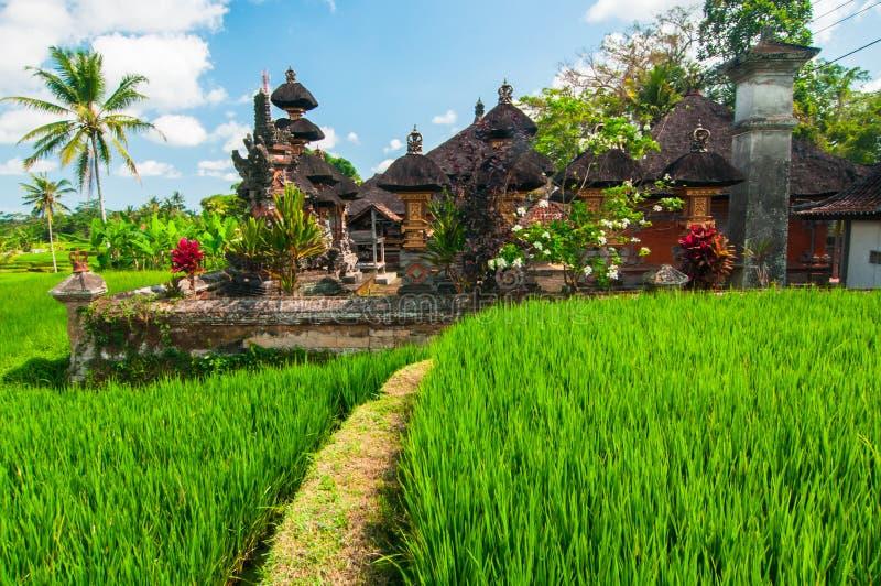 Templo pequeno no terraço do arroz, Bali, Indonésia fotos de stock