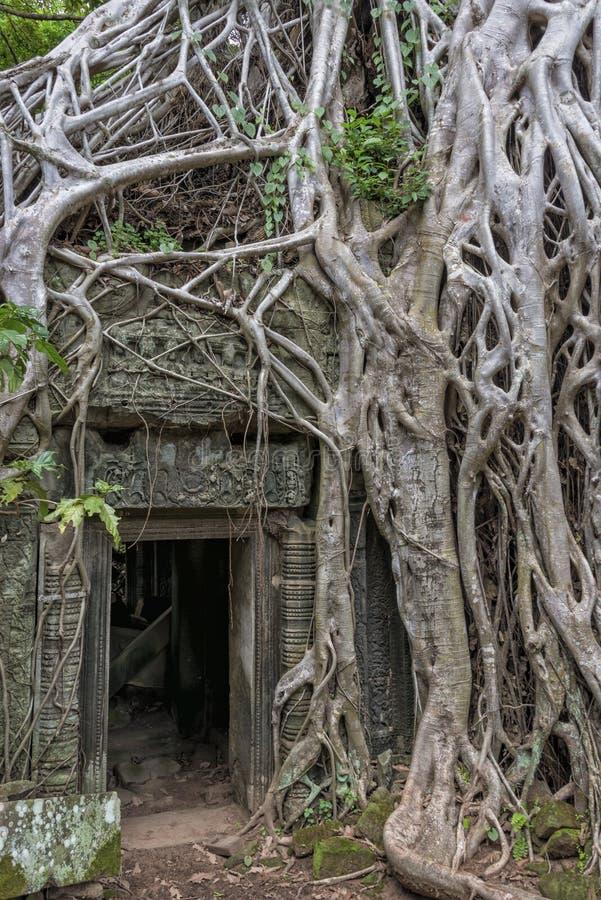 Templo Siem Reap, Angkor Wat, Camboya de TA Prohm fotografía de archivo
