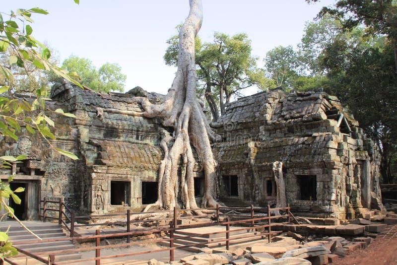 Templo Ta Phrom em Camboja fotografia de stock royalty free