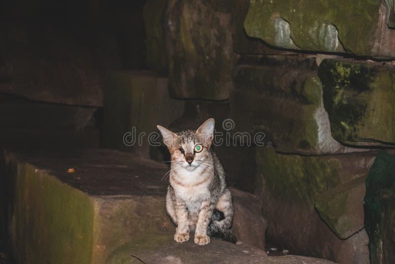 Templos de una del ojo del parásito ruina abandonados espeluznantes del gato Angkor Wat Cambodia foto de archivo libre de regalías