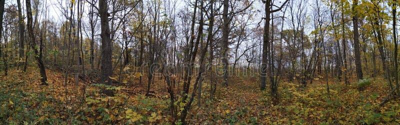 Tempo agradável do outono em Bielorrússia imagem de stock