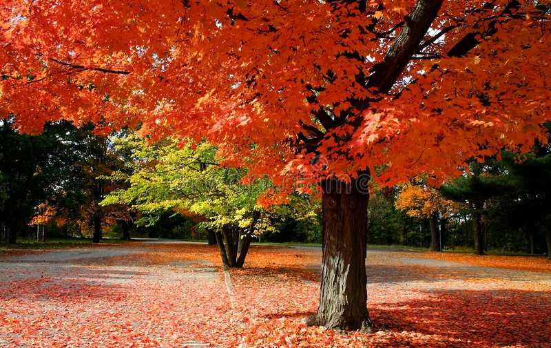 Tempo cénico do outono fotos de stock royalty free