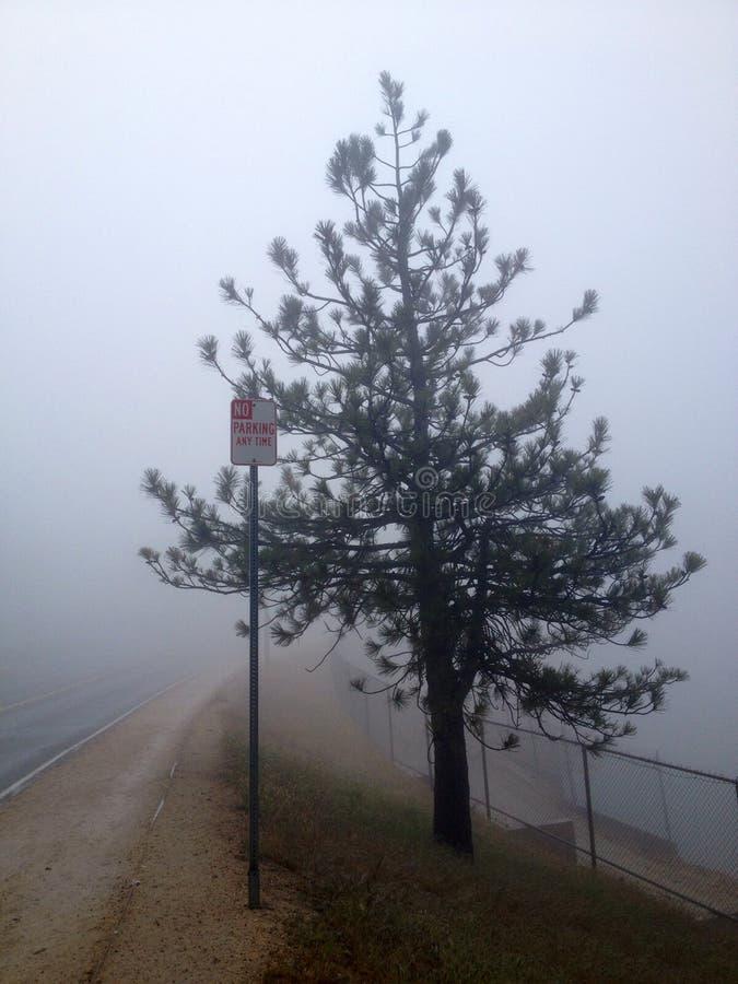 Tempo da névoa e a árvore imagem de stock