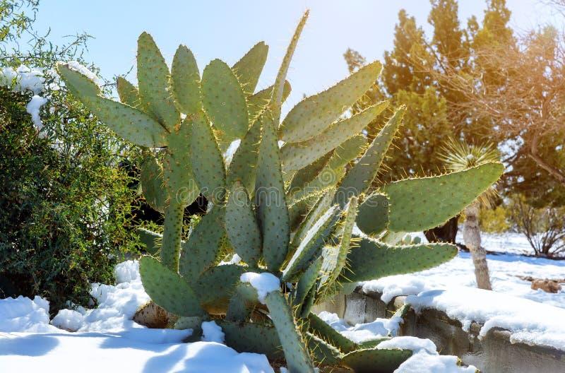 Tempo da tempestade da neve do deserto do Arizona no cacto coberto na neve fotos de stock