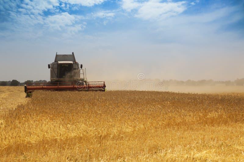 Download Tempo de colheita imagem de stock. Imagem de agricultural - 10058689
