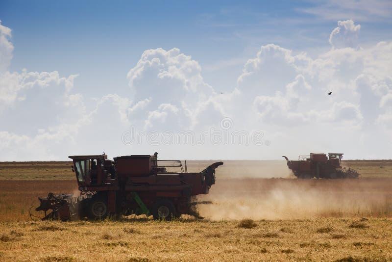 Download Tempo de colheita imagem de stock. Imagem de crescimento - 10058701