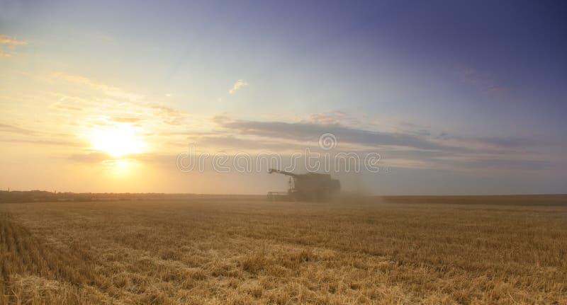Download Tempo de colheita foto de stock. Imagem de ouro, colheita - 10058722