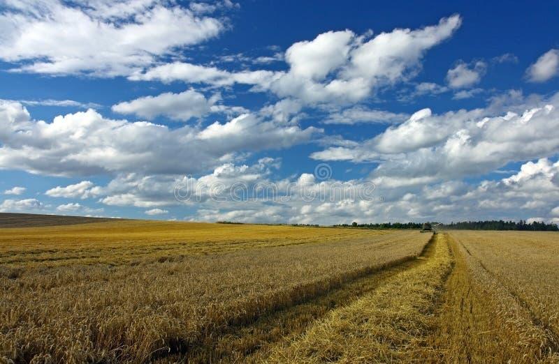 Tempo de colheita no campo fotografia de stock royalty free