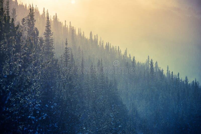 Tempo de inverno de Colorado imagem de stock royalty free