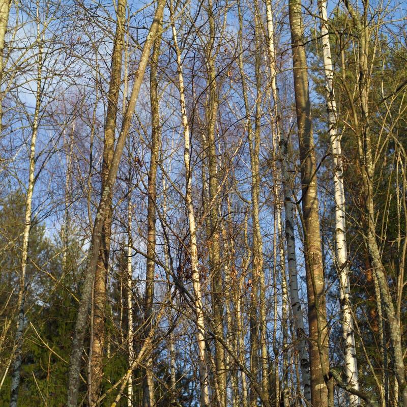Tempo de mola na floresta imagens de stock royalty free