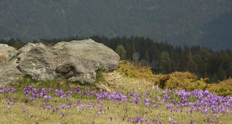 Tempo de mola nas montanhas de Rila, Bulgária imagem de stock