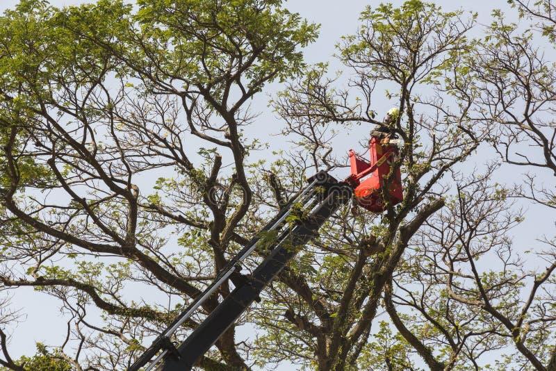Tempo de mola para a árvore foto de stock royalty free