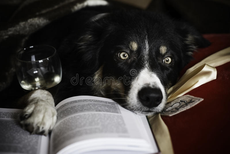 Tempo dei cani fotografia stock libera da diritti