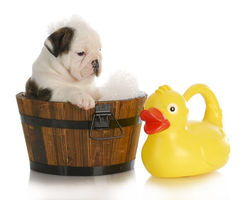 Tempo del bagno del cucciolo immagine stock libera da diritti