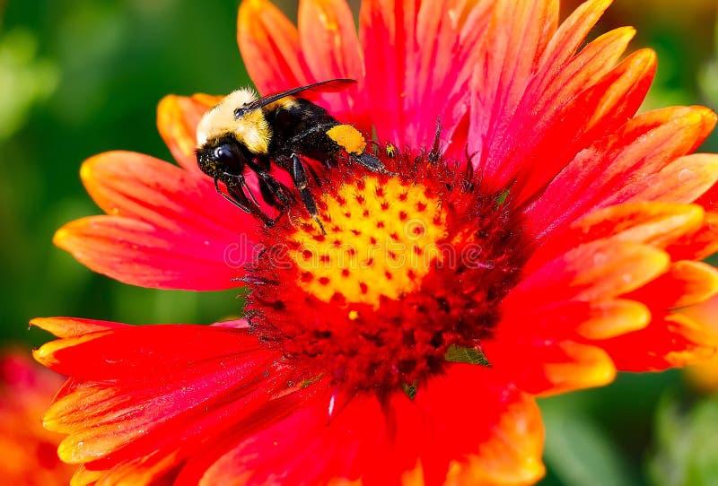 Tempo del polline immagini stock libere da diritti