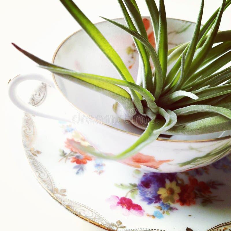 Tempo del tè con un airplant immagine stock libera da diritti