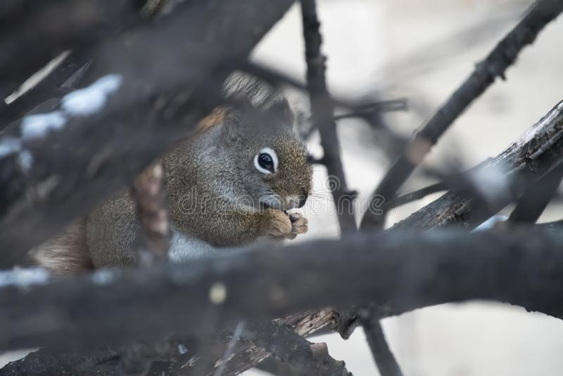 Tempo dello spuntino di tempo dell'albero per gli scoiattoli fotografia stock libera da diritti