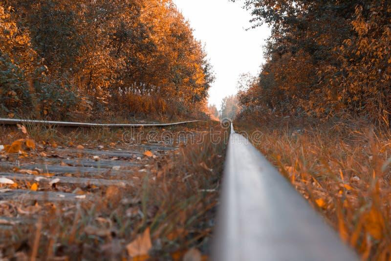 Tempo di autunno, binari ferroviari contro lo sfondo delle foglie cadute fotografia stock libera da diritti