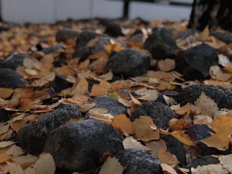 Tempo di autunno di It's fotografia stock libera da diritti