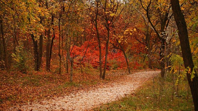 Tempo di autunno in legno fotografia stock libera da diritti