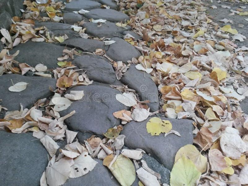 Tempo di caduta con le foglie secche fotografie stock