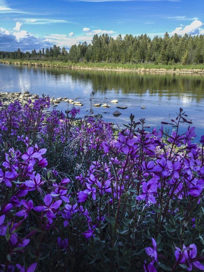 Tempo di caduta sul fiume fotografia stock libera da diritti