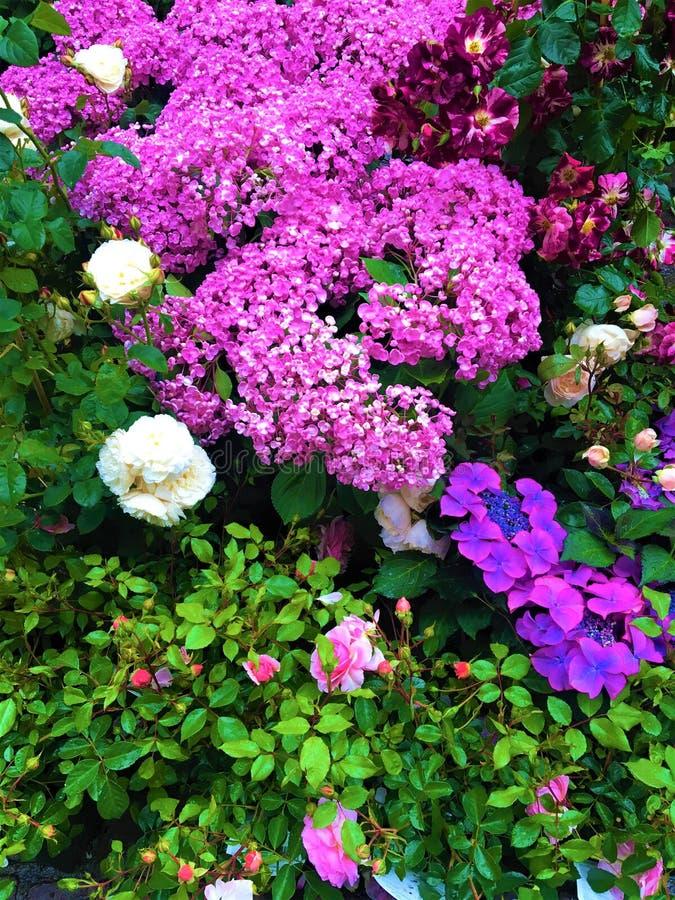 Tempo di primavera, colori, fiori, hortensia e modello magico fotografie stock libere da diritti