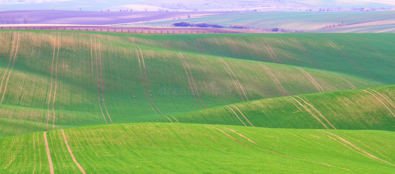 Tempo di primavera in Moravian Toscana, regione del sud del vino di Moravian fotografie stock