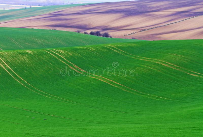 Tempo di primavera in Moravian Toscana, regione del sud del vino di Moravian fotografia stock libera da diritti
