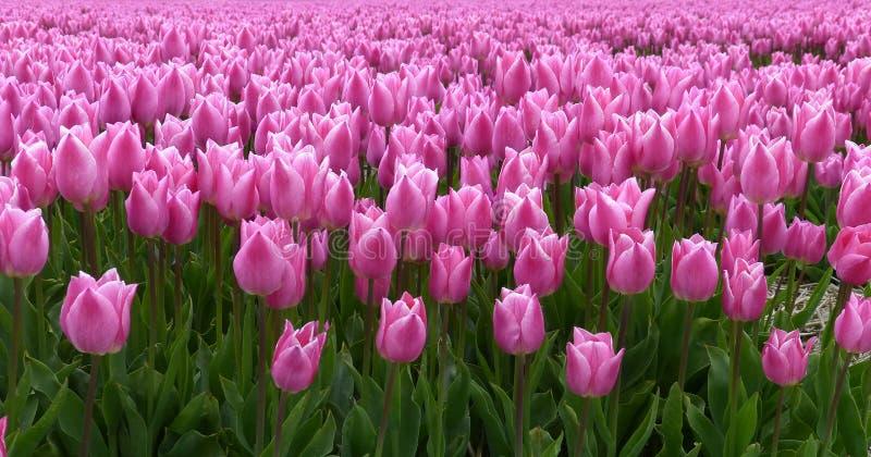 Tempo di primavera nei Paesi Bassi fotografia stock libera da diritti