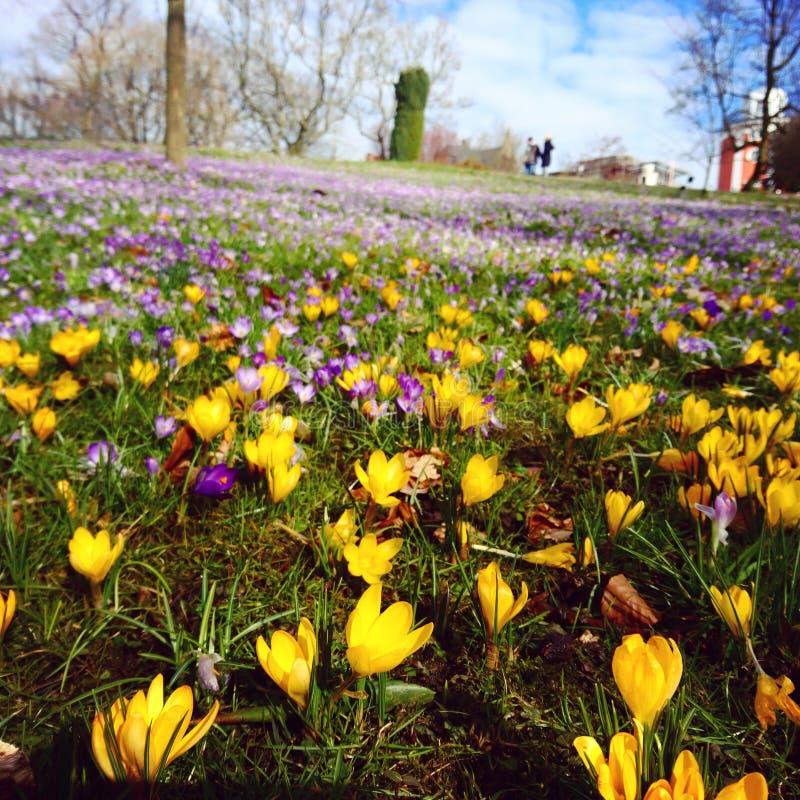 Tempo di primavera a Wuppertal immagine stock