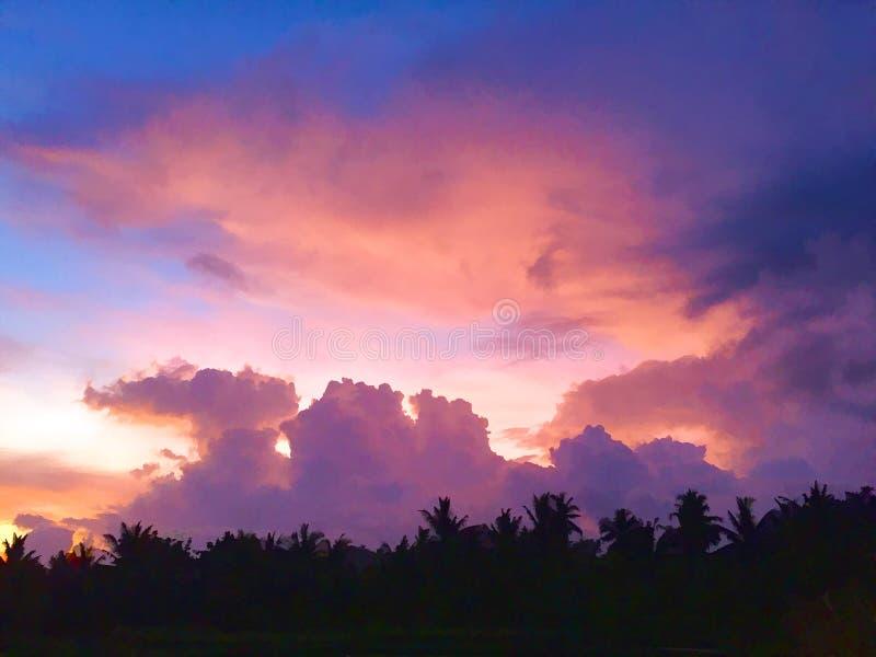 Tempo di tramonto nell'illustrazione digitale della giungla tropicale illustrazione di stock