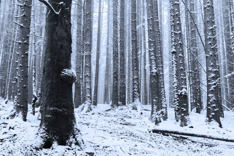 Tempo di Winer dentro la foresta un giorno nebbioso fotografie stock