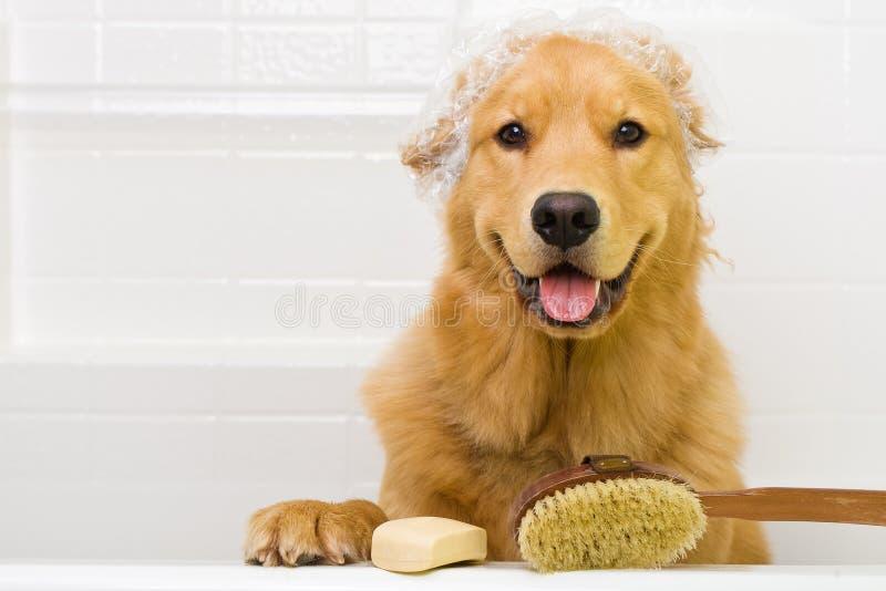 Tempo do banho para o cão imagens de stock royalty free