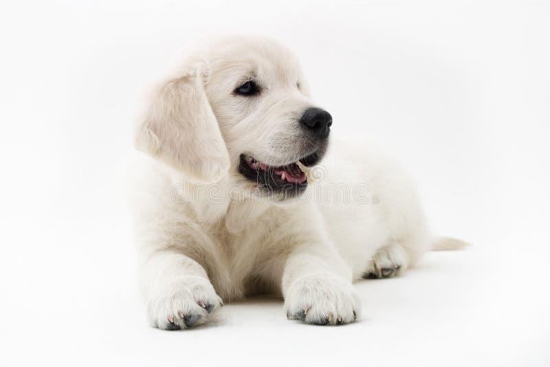 Tempo do filhote de cachorro fotos de stock royalty free