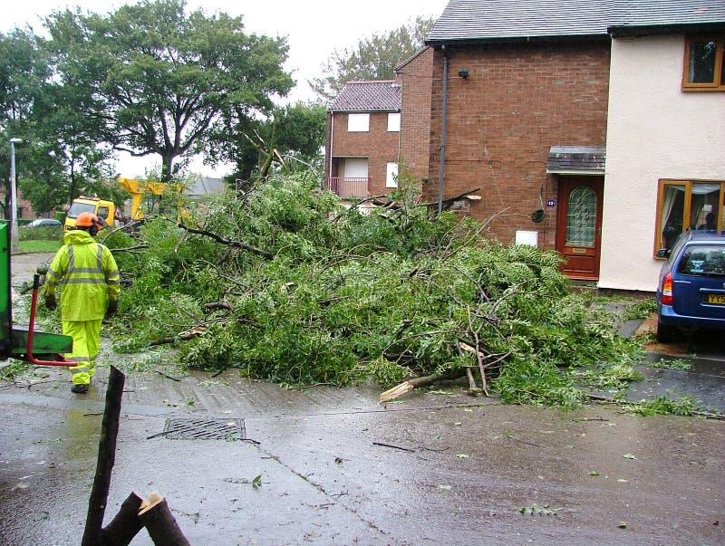 Tempo estremo, zona di disastro, alberi caduti, fotografie stock