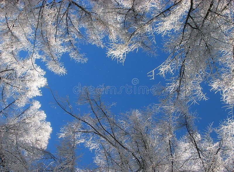 Tempo freddo fotografia stock libera da diritti