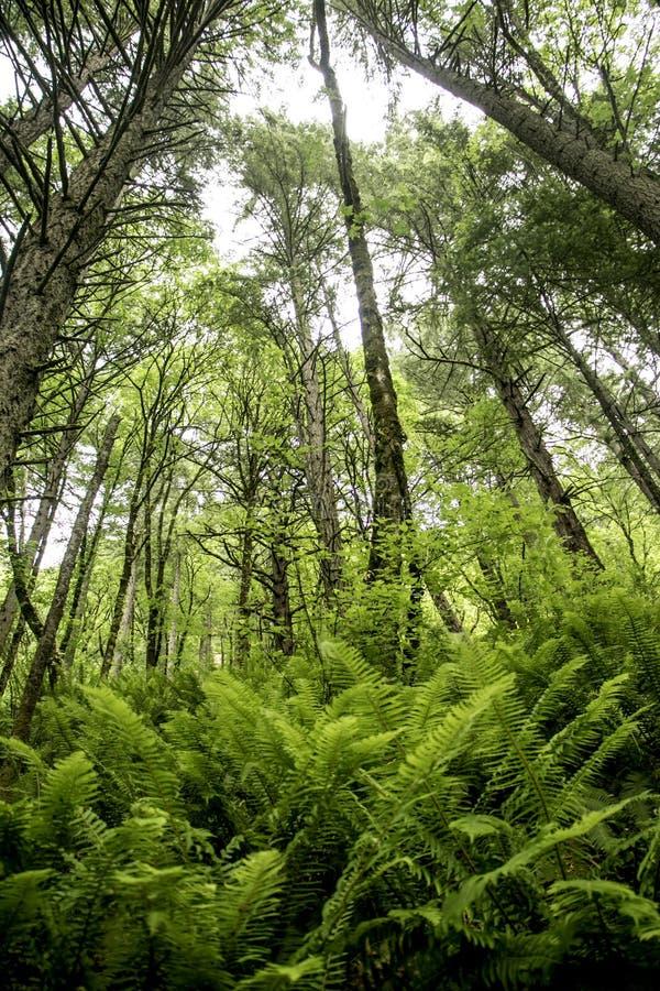 Tempo fresco nella foresta fotografia stock