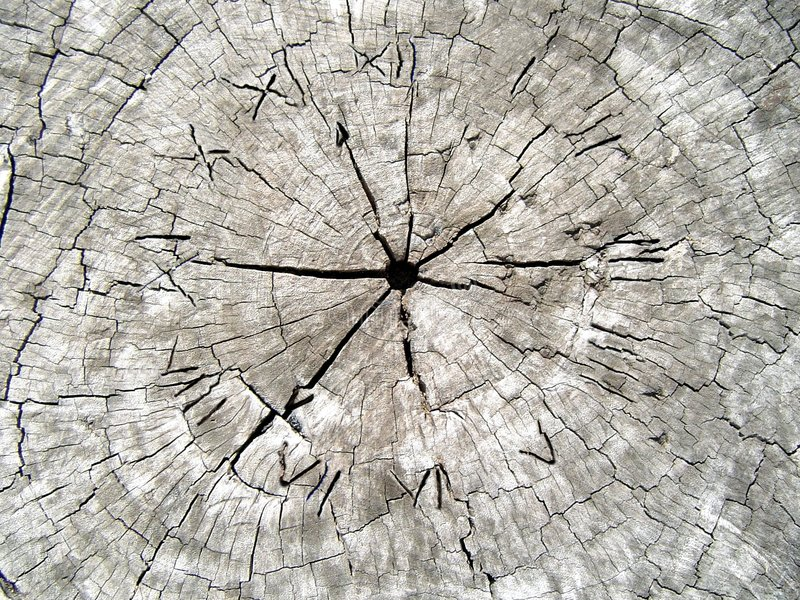 Tempo na madeira