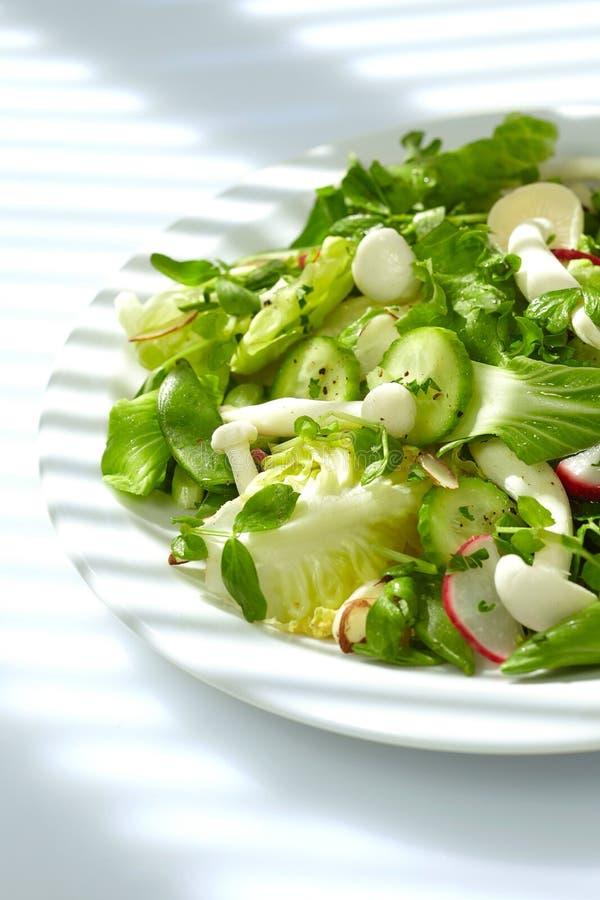 Tempo natural do almoço da salada imagem de stock
